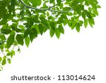 green fresh leaf frame on white background isolate - stock photo