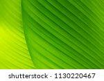 green banana leaf background | Shutterstock . vector #1130220467