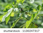 sparrow on tree at park | Shutterstock . vector #1130247317