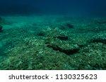 sea grass under the aegean sea... | Shutterstock . vector #1130325623
