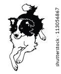 agility,animal,black white,border collie,breed,canine,collie,dog,dog breed,domestic animal,england breed,farm,herding dog,herding livestock,isolated dog