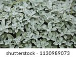 green background  botany ... | Shutterstock . vector #1130989073