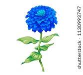 beautiful blue flower zinnia...   Shutterstock .eps vector #1130993747