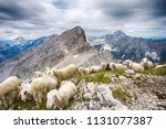 flock of sheep on mala... | Shutterstock . vector #1131077387
