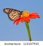 A Monarch Butterfly On A Red...