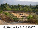Fields with fruit trees and...