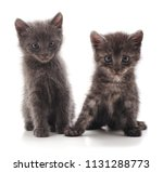 two gray cat isolated on a... | Shutterstock . vector #1131288773
