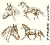hand drawn horses - stock vector