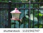 chickadee titmouse songbird... | Shutterstock . vector #1131542747