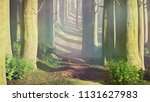 misty beech forest at dawn  3d... | Shutterstock . vector #1131627983