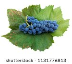 grapes of red wine blue...   Shutterstock . vector #1131776813