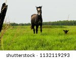 the horse grazes on the meadow. ... | Shutterstock . vector #1132119293