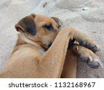dog affection is love | Shutterstock . vector #1132168967