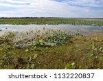 waterlilies floating on the...   Shutterstock . vector #1132220837