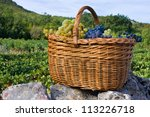 Basket of freshly picked grapes - stock photo