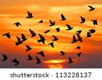 Flying Pigeons On The Sunset...