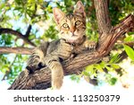 A Cat sitting on a tree - stock photo