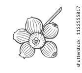bilberry   vector hand drawn... | Shutterstock .eps vector #1132555817