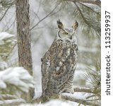 Long Eared Owl In Snowfall