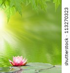 Stock photo image of a lotus on the water on a green background 113270323