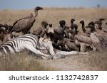 vultures eating dead zebra   ... | Shutterstock . vector #1132742837