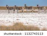 zebras migration   ... | Shutterstock . vector #1132743113