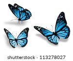 Stock photo three blue butterfly isolated on white background 113278027