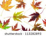 autumn maple leaves on white | Shutterstock . vector #113282893