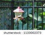 blue jay bird songbird flying... | Shutterstock . vector #1133002373