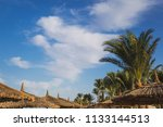 beautiful green palm trees... | Shutterstock . vector #1133144513