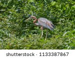 red heron in the green forest... | Shutterstock . vector #1133387867