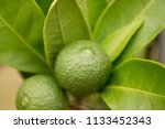 fresh green lime fruits  leaves ... | Shutterstock . vector #1133452343