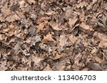 Background. Old Oak Leaves...