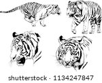 set of vector drawings on the... | Shutterstock .eps vector #1134247847