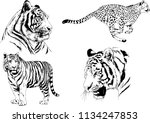 set of vector drawings on the... | Shutterstock .eps vector #1134247853