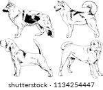 vector drawings sketches... | Shutterstock .eps vector #1134254447