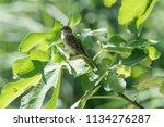 sparrow on tree at park | Shutterstock . vector #1134276287