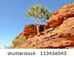 Lonely Tree In Kings Canyon An...
