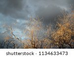 lacy lit up bare tree limbs... | Shutterstock . vector #1134633473