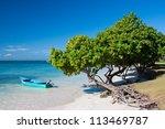 Caribbean Boat  Tree   Beach