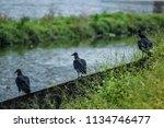 the watchers of death   Shutterstock . vector #1134746477