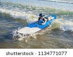 happy baby boy   young surfer... | Shutterstock . vector #1134771077