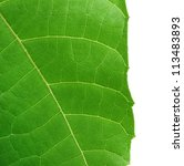 Small photo of Decorative leaf of Abroma Augusta or medicinal Olatkambal of Bangladesh