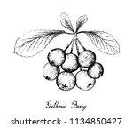 Berry Fruit  Illustration Hand...