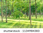 beautiful sunny park with light ... | Shutterstock . vector #1134984383