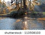 Autumn Landscape. Park In...