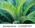 green tropical leaves texture... | Shutterstock . vector #1135087397