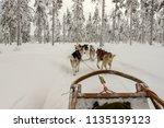 dog sledge ride with nine husky ... | Shutterstock . vector #1135139123