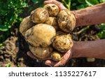 organic homemade vegetables in... | Shutterstock . vector #1135227617