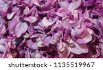 blooming pink lilac flowers  ...   Shutterstock . vector #1135519967